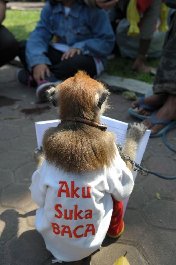 Monyet saja suka baca / photo junanto
